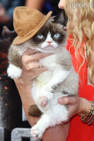 Grumpy cat на церемонии MTV Movie Awards-2014