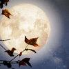 Лунный календарь на неделю с 4 по 10 ноября